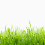 dewy_grass_hd1080p