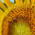 Meizu MX4 - przykładowe zdjęcie 2